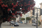 Pohutukawa are doing rather too well in San Francisco.