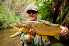 Some of the biggest brown trout are in the Bay of Plenty.