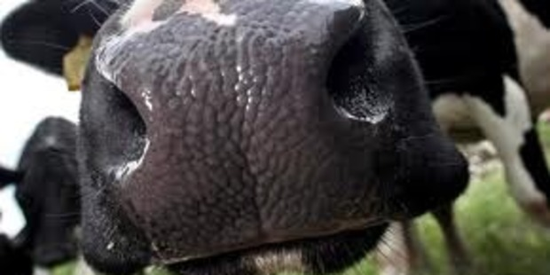 Fonterra has raised its 2014 farmgate milk price payout to a record $7.80 a kg of milksolids.