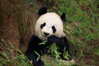 Adorable, but endangered.  Where are the independent financial advisers? Photo / Thinkstock