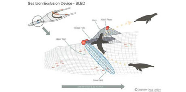 A diagram of a sea lion exclusion device inside a trawl net. Image / Deepwater Group