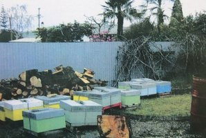 PLACE WAS BUZZING: These hives, allegedly stolen, were located in a Masterton backyard.