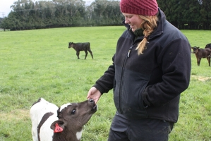 Alix Gray from Morpeth in Northumberland is a favourite with the calves on Maharahara dairy farmer Andrew Cammock's farm.