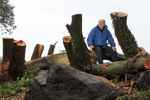 Another resident has joined former Mount councillor Bob Tulloch (pictured) in expressing horror that the Tauranga City Council is cutting down 40-year-old trees in Coronation Park.