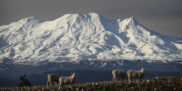 Mount Ruapehu. Photo / Greg Bowker