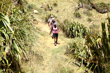 Trampers on the Te Henga Walkway, part of the Hillary Trail. Photo / Natalie Slade
