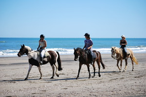 Horse trekking on Awhitu peninsula. Photo / Greg Bowker