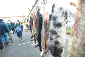 An increase in hunting competitions seems to have worsened the situation for farmers.