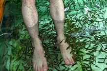Julian Hanton has his feet cleaned by fish in Thialand.