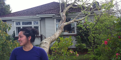 An ancient elm cracked in fierce gales and hit a rented bungalow in Christchurch. Photo / APNZ