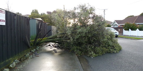 A tree breaks through a fence in the Christchurch suburb of St Albans. Photo / Dale Kershaw