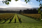 Waipara is best known for its wineries. Photo / Supplied