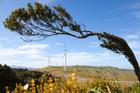 Meridian's Te Uku Wind Farm.
