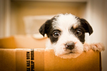 How can you say no to those puppy dog eyes?Photo / Thinkstock