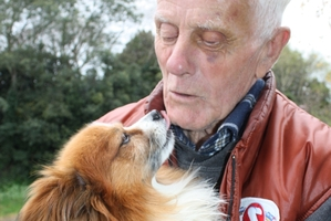 Patrick Mullholland and his 8-year-old papillon puppy Peedee at their home at Rawhiti St following an attack by another dog last Thursday. Photo / Christine McKay