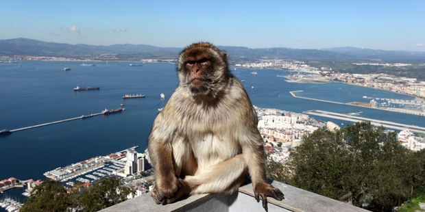 Mingle with the Macaques in Gibraltar.