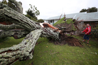 Grant Moore inspects damage to his property after a mini tornado whipped through Hairini, Tauranga.  Photo / Joel Ford