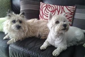 Charlie (left) is injured and Jessie is dead after they were stabbed by a burglar during a bungled burglary attempt.