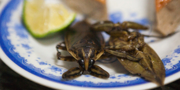 The juice from the giant water bug in Vietnam is the secret to the sweet green apple after-taste in the dipping sauce for banh cuon.