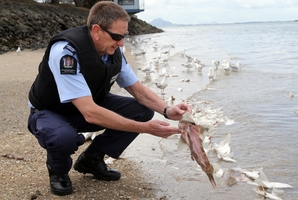 Fisheries officer Steve Rudsdale inspects the fish. PHOTO/JOHN STONE