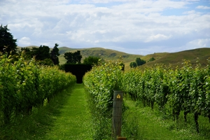 Two major Gisborne vineyards have started multi-million dollar expansion plans.