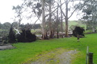 Storm damage in Coroglen, Coromandel Peninsula. Photo / Matt Castle