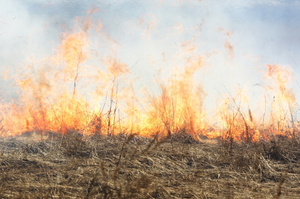 The out-of-control fire came close to nearby houses along the road frontage. Photo / Thinkstock