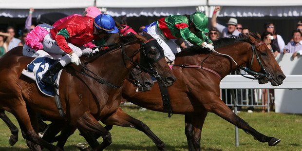 Lisa Alpress, in green, right, gets Blood Brotha home in the Group three Pacific Jewellers Wellington Cup over 2400m at Trentham yesterday. Photo / Getty Images