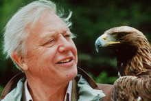 British naturalist David Attenborough says restrictions are needed on the population growth of humans. Photo / Supplied