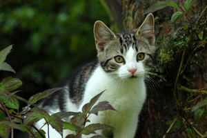 Dr Morgan has cats under threat. Photo / Thinkstock