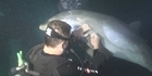 Watch: Dolphin asks divers for help