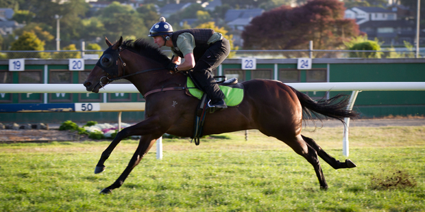 Minaj had no problems handling the Ellerslie track during his workout yesterday. Photo / Richard Robinson