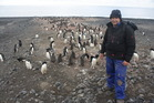Ecologist Phil Lyver believes the Adelie penguin is benefiting from a reduced toothfish population. Photo / Isaac Davison