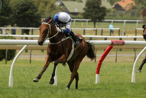 Jockey Jason Waddell will be looking back in disappointment at losing the ride aboard Ruud Awakening in the Karaka Million. Photo / Supplied