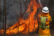 A firefighter battles a blaze in Sydney's Pittwater. Photo / Glenn Nicholls