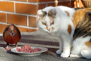 The problem is that it's rubbish. Unless you are in the habit of sealing that cat-flap at sunset, your cat is out much of the night, ranging over an area of more than 50ha killing for recreation.  Photo / APN
