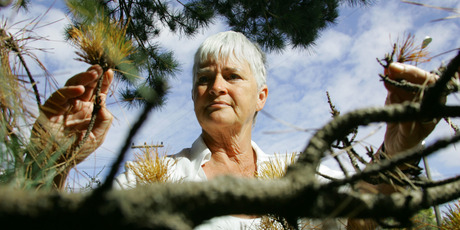 Hueline Massey says the attitudes shown towards trees are disturbing. Photo / Steven McNicholl