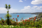 Waiheke Island. File photo / NZ Herald