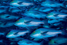 Research shows that fish in Antarctic waters can survive sharp changes in temperature. Photo / Thinkstock