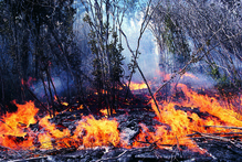 Fires burned up to 180 hectares of forest that started near Kellys Bay in Northland yesterday. File Photo / Thinkstock