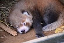 Photo / Auckland zoo