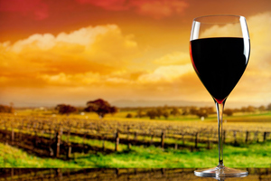 Hawke's Bay wine is some of the best around, according to the results of a recent competition.
