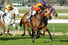 Thrive Photo / supplied