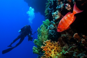 Diving is a great way to see ocean wildlife.