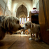 Dogs at the annual SPCA Auckland Blessing of the Animals, held at St Matthew-In-The-City. Photo / Brett Phibbs