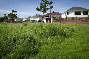 After extensive media coverage of Auckland's unmown grass verges, there was a pick-up in voting. Photo / Sarah Ivey