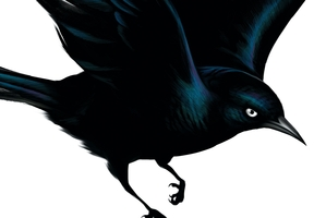 Album cover for Blackbird by Fat Freddy's Drop.