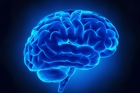 The brain is the most complicated object in the known universe.  Photo / Getty Images