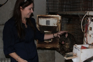 Waikato University psychology PhD student Kristie Cameron has been working with possums to determine their food preferences, and how hard they'll work for different types of food.