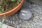 A reader from Pauanui spotted this in a neighbour's garden.